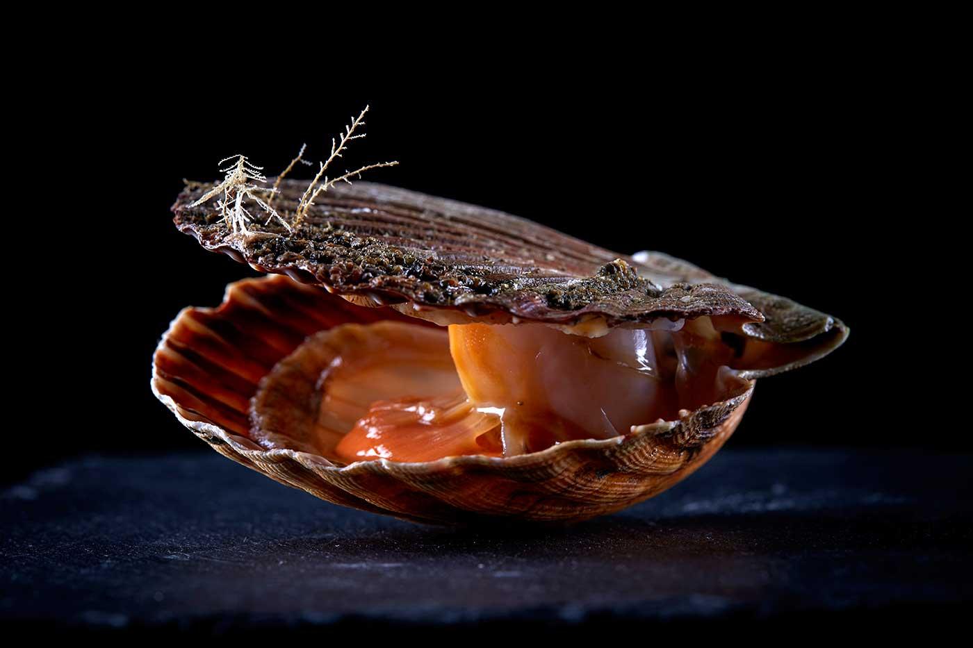 Photographie produits de la mer -Studio L Rodriguez
