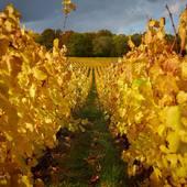 La magie des couleurs automnales 🤩 #vignoble #vignes #vignerons #champagne #photography #daylight #laurentrodriguez #photographereims
