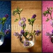 Luzerne fraîche - juillet 2020 Le souci du détail est au cœur de mon métier, qu'il s'agisse de l'éclairage, de l'angle de prises de vue ou bien même de la couleur de fond #luzerne #fonddifferent #photographereims #laurentrodriguez